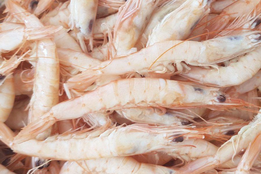 Gamba Blanca Huelva Gambas online marisco shop tienda cocer marisco cómo